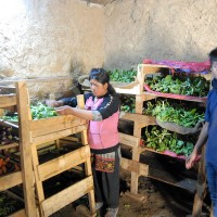 Stanzin Stobdan and Yangchen in the Vegetable Store. The store is underground, so that it is cool in Summer and warm in Winter