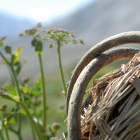 The traditional Basket
