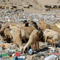 Visit to the Leh Landfill