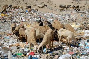 Visit to the Leh Landfill